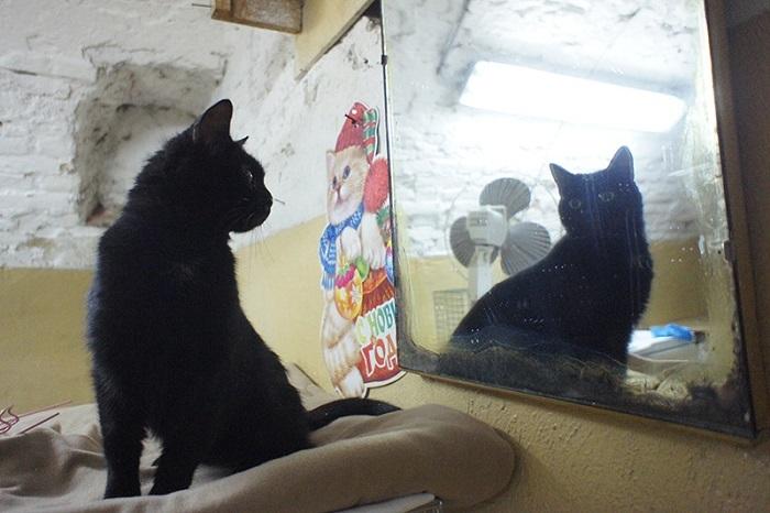 ВФилармонии Петербурга насцене сыграет эрмитажный кот